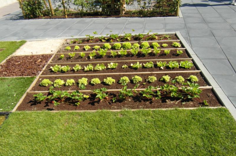 Entretien plantes aquatiques for Entretien plantes jardin