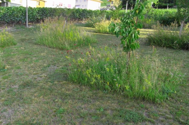 concepteur paysagiste gen ve c 39 vert pelouse. Black Bedroom Furniture Sets. Home Design Ideas