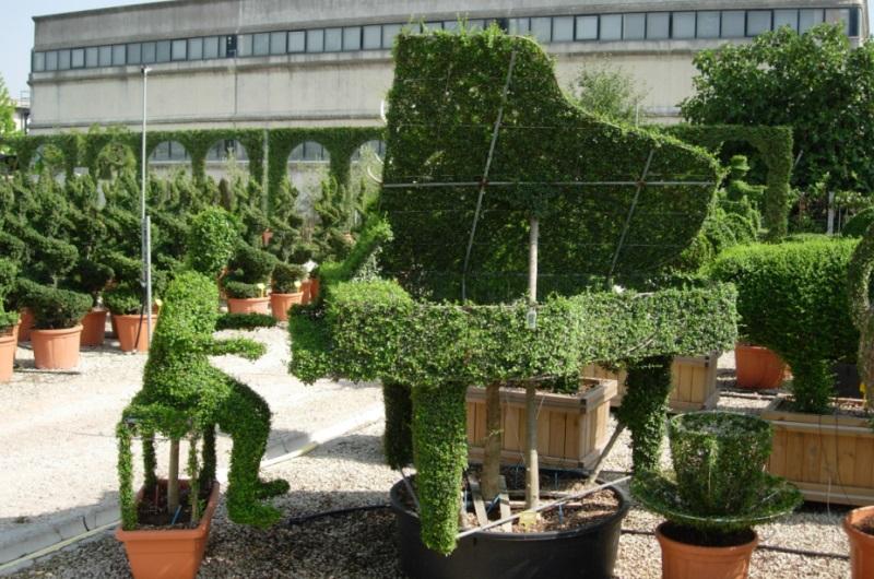 Concepteur paysagiste gen ve c 39 vert taille de haie for Concepteur paysagiste